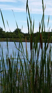 Protect shorelines and wetlands